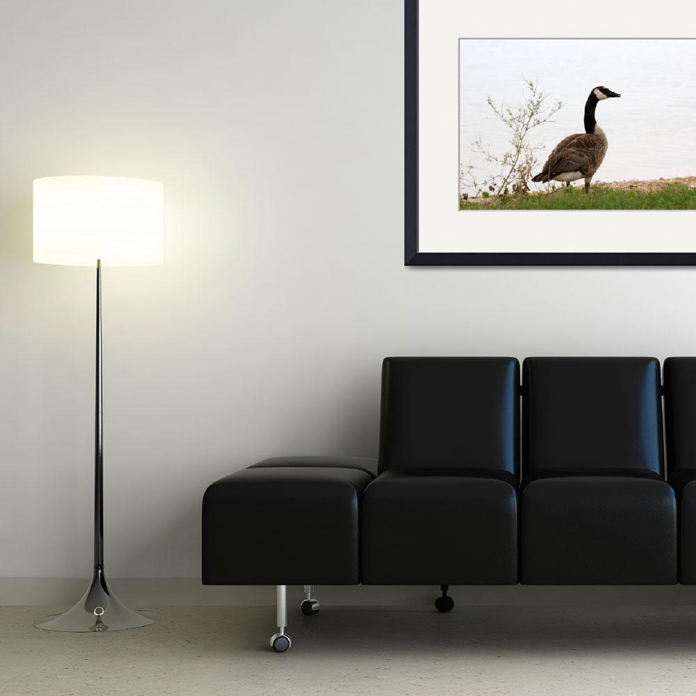 """""""Canada goose&quot  by cameragal"""