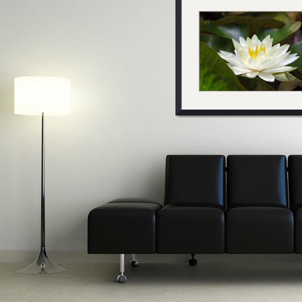 """""""White Water Lily&quot  by kwinkelerphotos"""