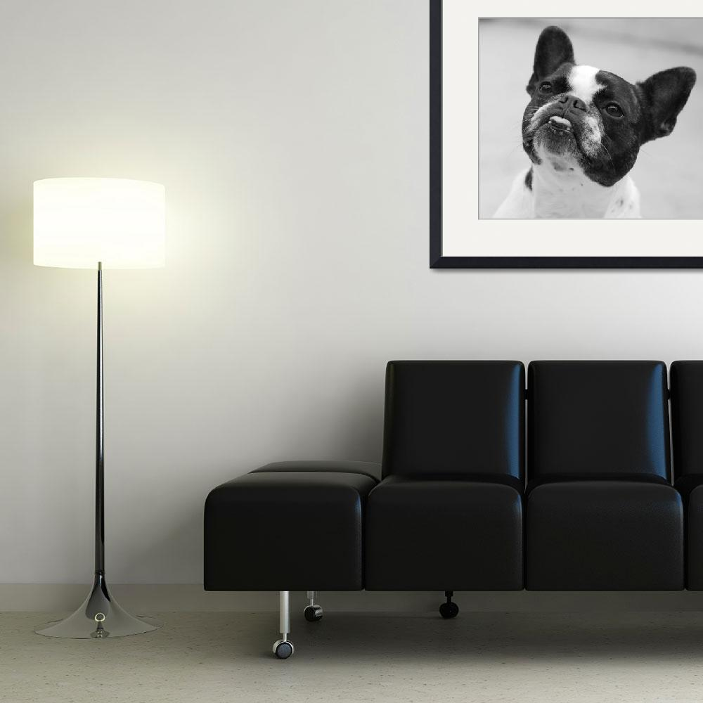 """Boston Terrier""  by maryostudio"