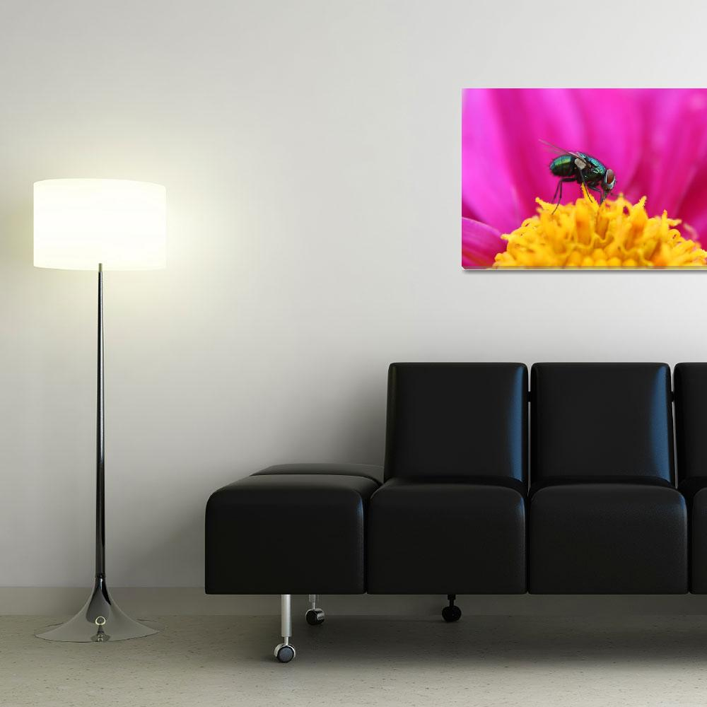 """""""Fly on a Purple Flower&quot  (2014) by rhamm"""