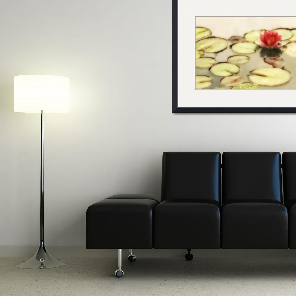"""""""Water Lily Number 2""""  (2010) by vincent-field_photography"""
