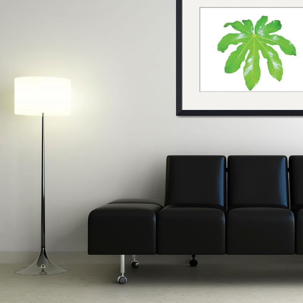 """""""Large Green Leaf&quot  (2014) by nromano63"""