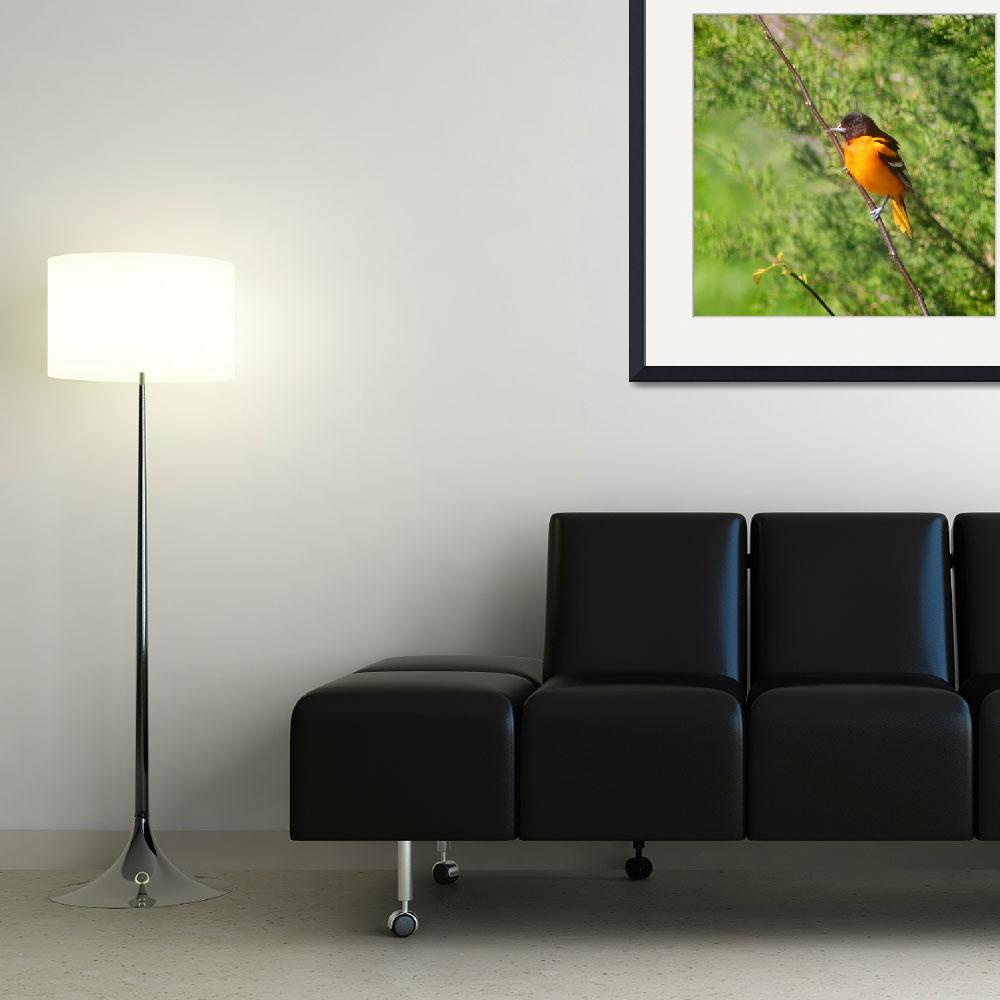 """""""Baltimore Oriole on Tree Branch Square Format&quot  (2013) by KsWorldArt"""