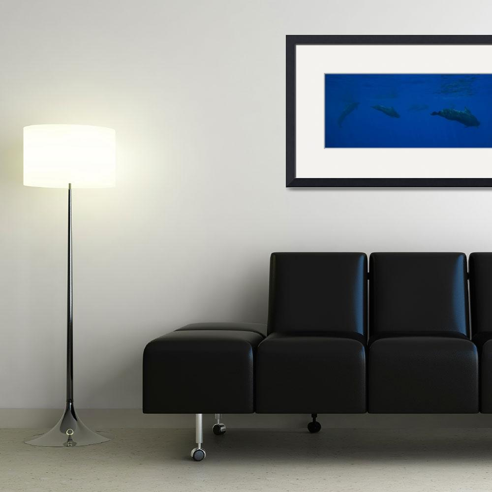 """Pilot Whale Panorama&quot  (2012) by ConnorOBrien"