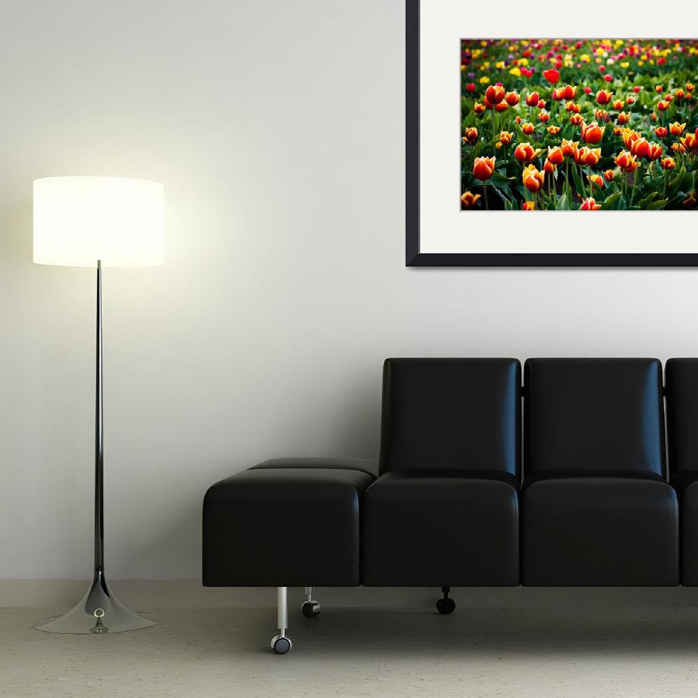 """Tulips&quot  (2009) by ScottsWorld"
