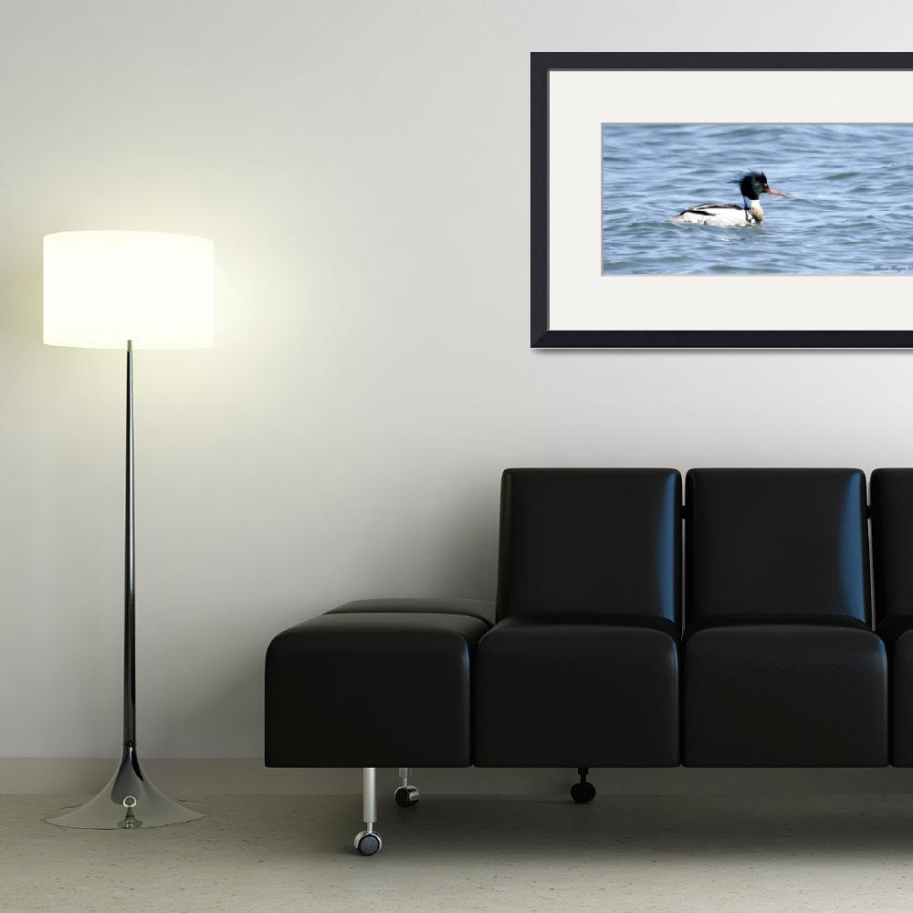 """""""Red-breasted Merganser&quot  (2013) by WildAboutNaturePhotography"""