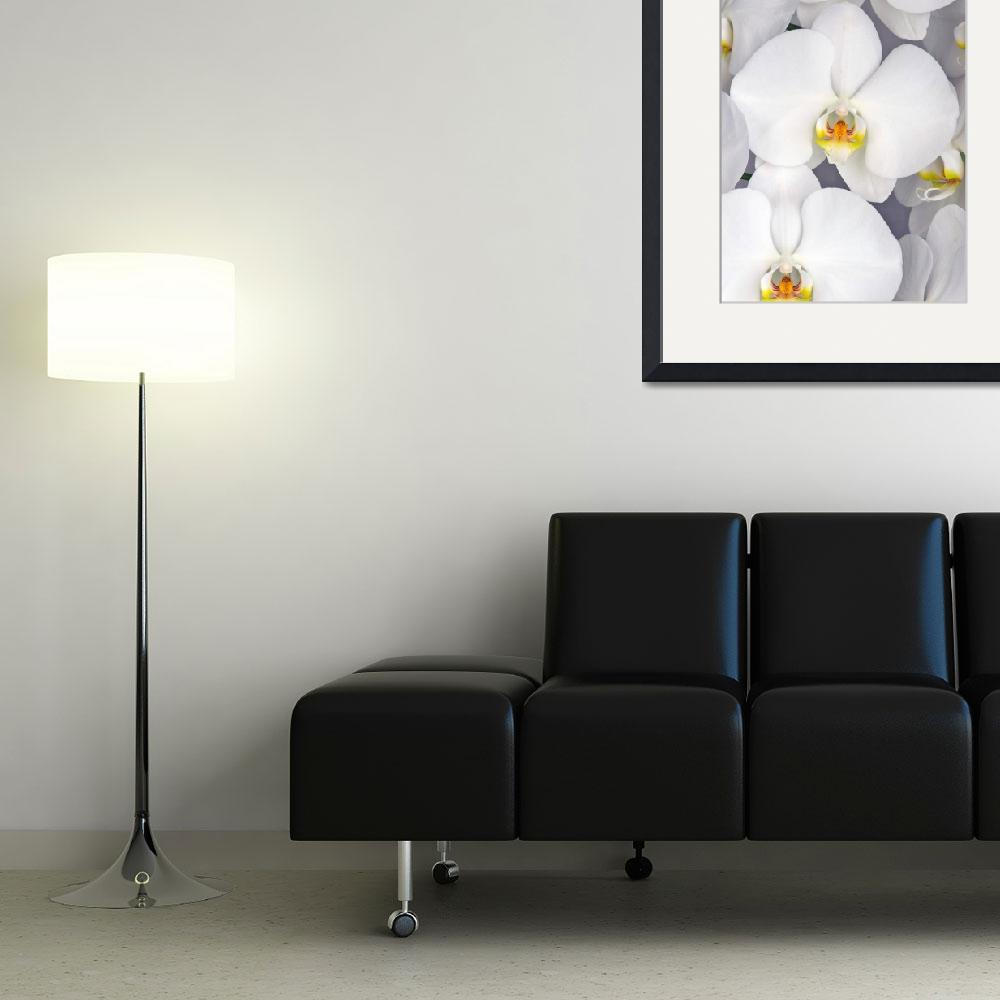 """""""White Phalaenopsis&quot  (2011) by ImageArt-Photography"""