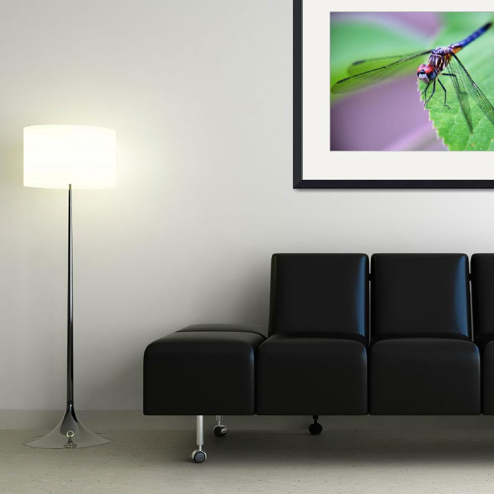 """""""Dragon Fly&quot  (2009) by RTMacGowan"""