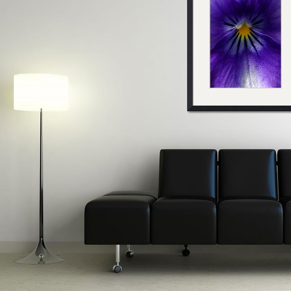 """""""Pansy Abstract""""  (2012) by lisa5"""