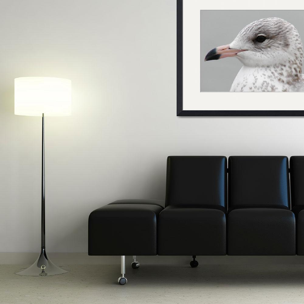 """""""Seagull in Profile&quot  (2009) by robvena"""