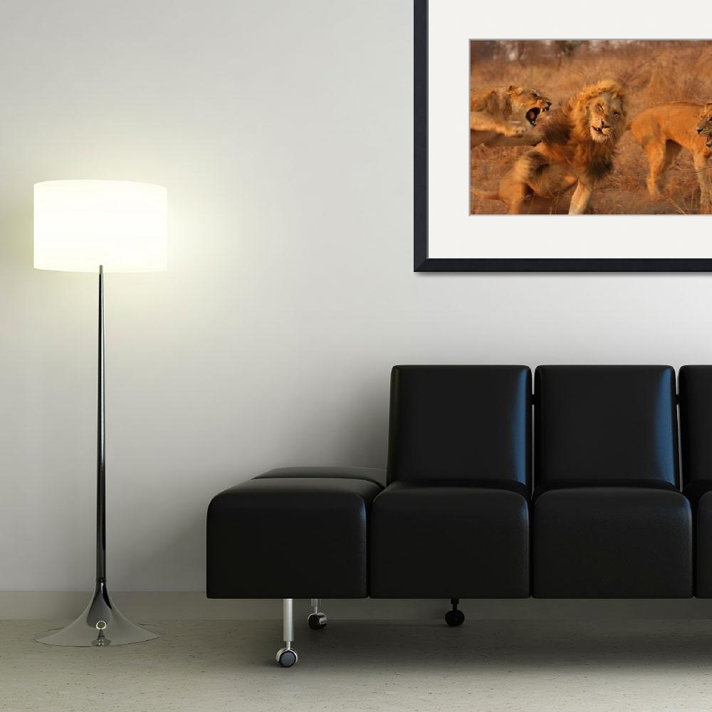 """""""Lion Fight (4)""""  by malcolmbowling"""