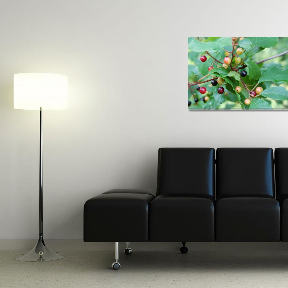 """""""Berries""""  (2008) by lisagriffin"""