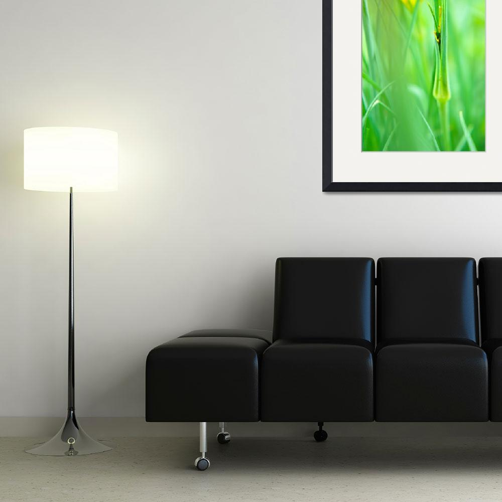 """""""HWNo8-A Touch Of Yellow In A Sea Of Green&quot  (2011) by Ravenworksca"""