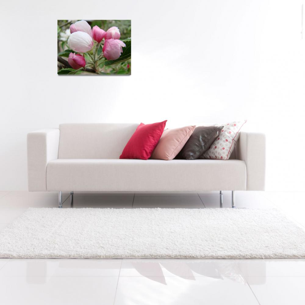 """""""APPLE BLOSSOMS BUDS Art Print Pink Blossoms Cards&quot  (2009) by BasleeTroutman"""