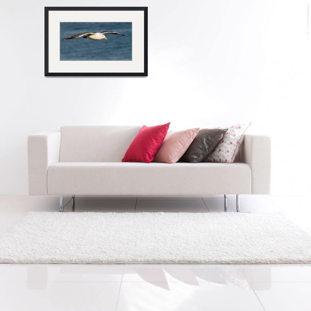 """""""flying Seagull&quot  by eyalna"""