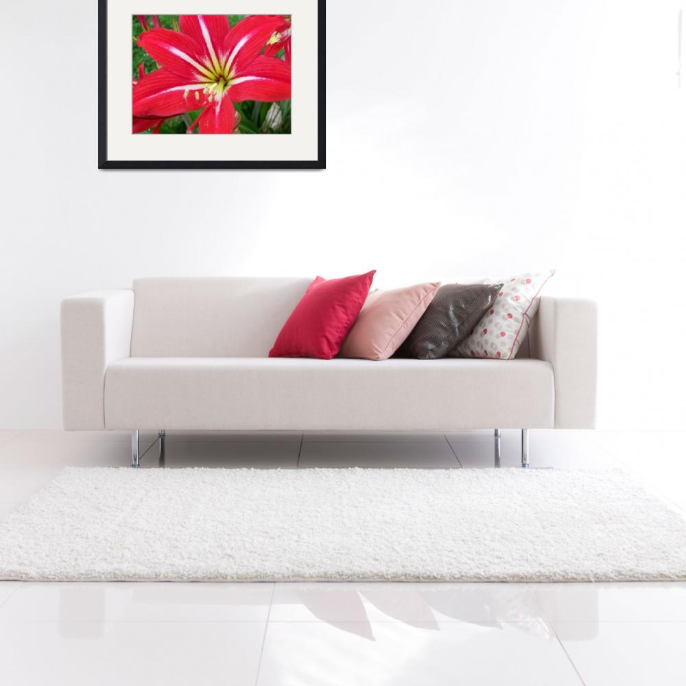 """""""big red flower 2&quot  (2009) by imagineit"""