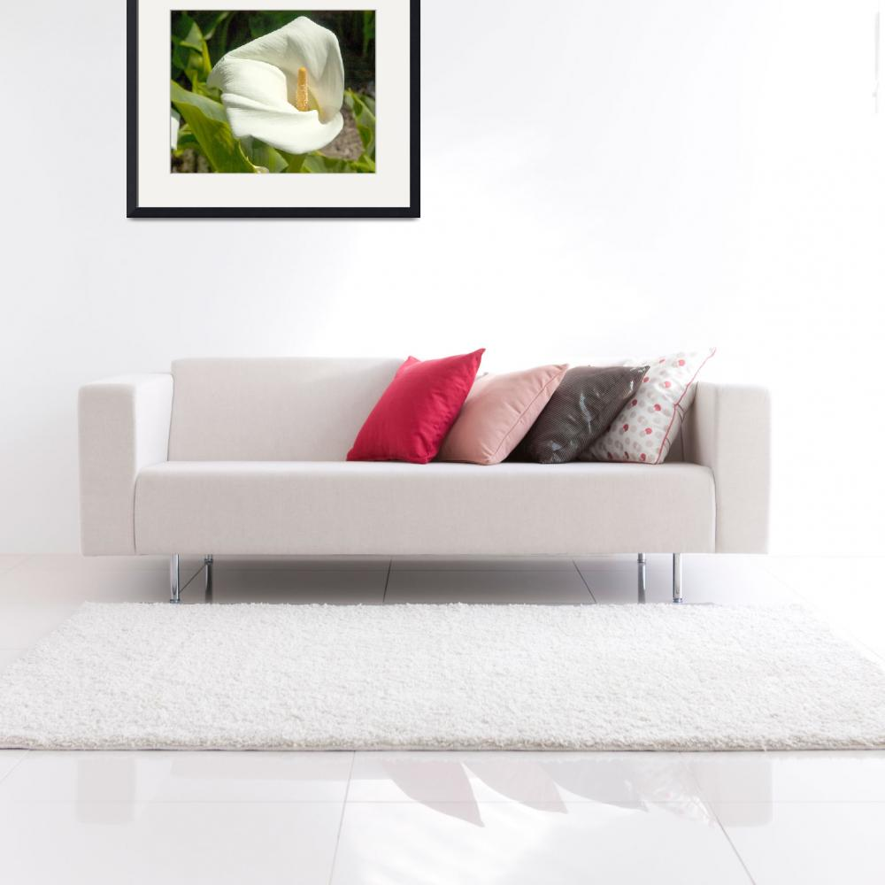 """""""White Lilly-20040327_031&quot  by FindleyPhoto"""