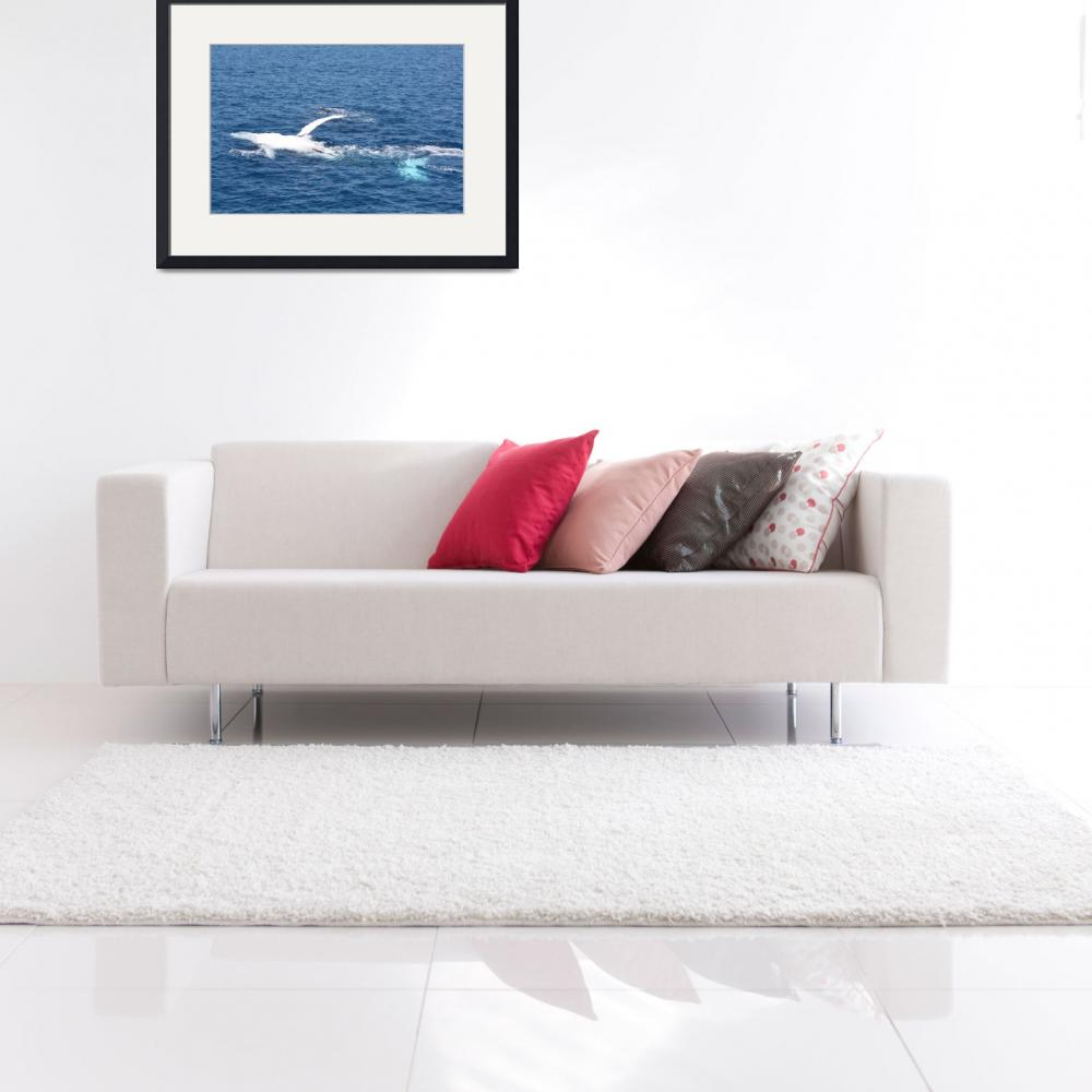 """""""NaP_ Whale Watching138&quot  by nevilleprosser"""