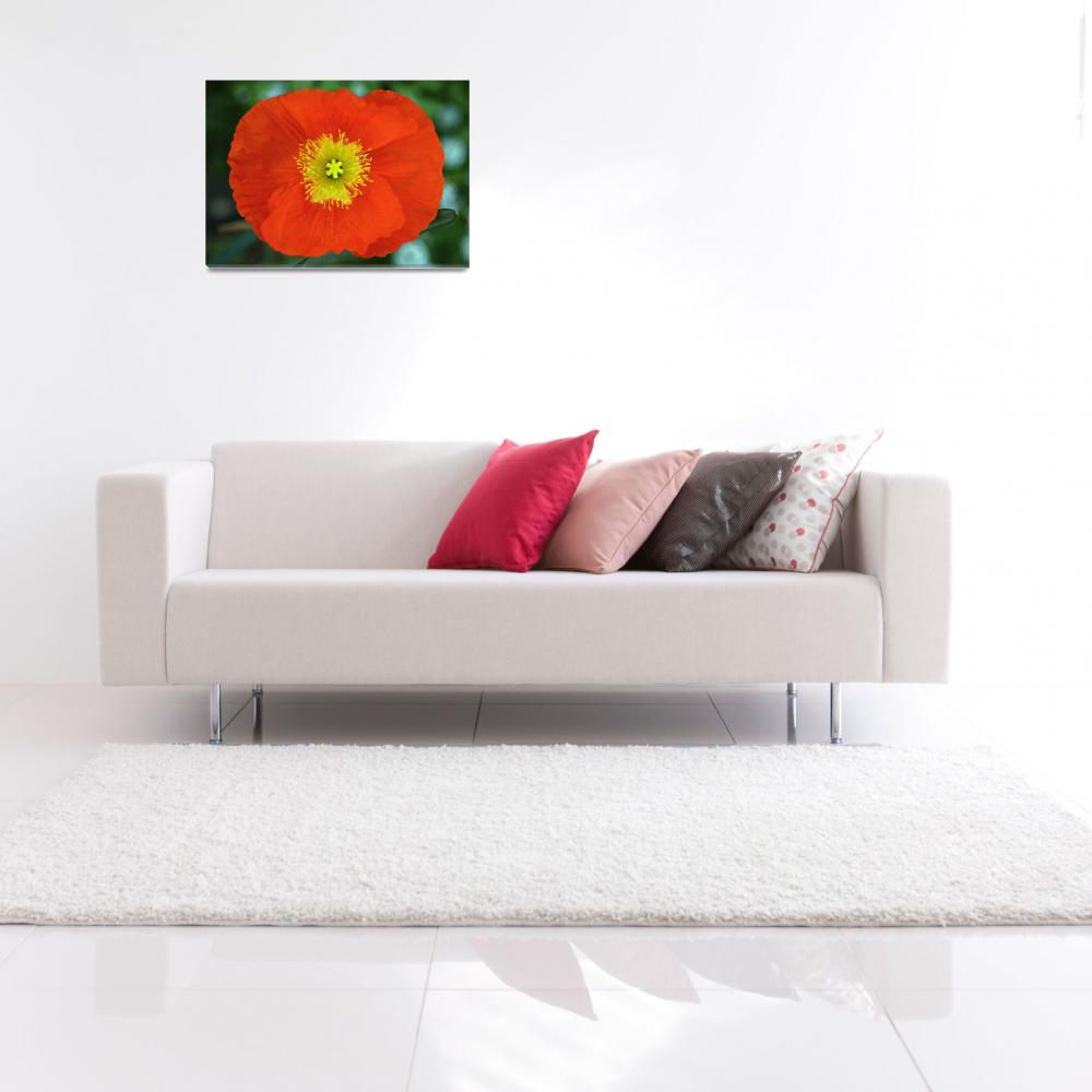 """""""Red Poppy&quot  (2008) by paulhood"""