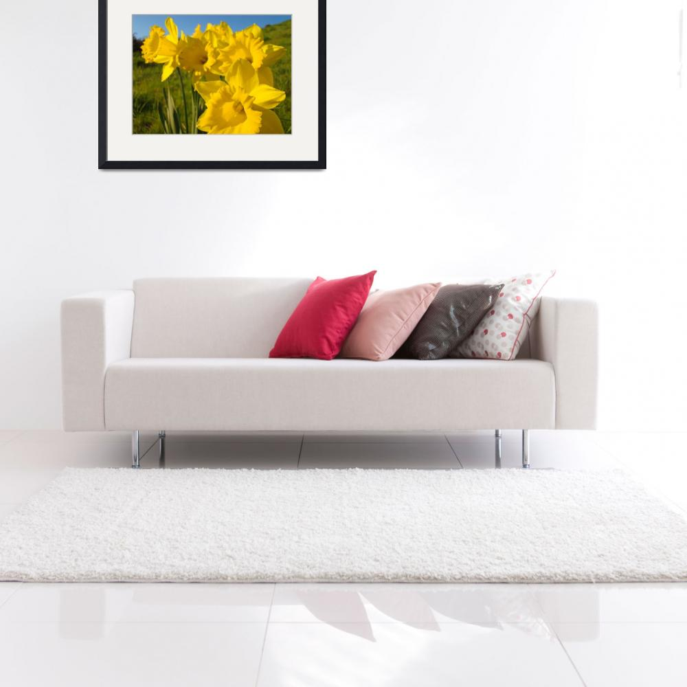 """""""Golden Yellow Daffodil Flowers art prints Spring&quot  (2010) by BasleeTroutman"""