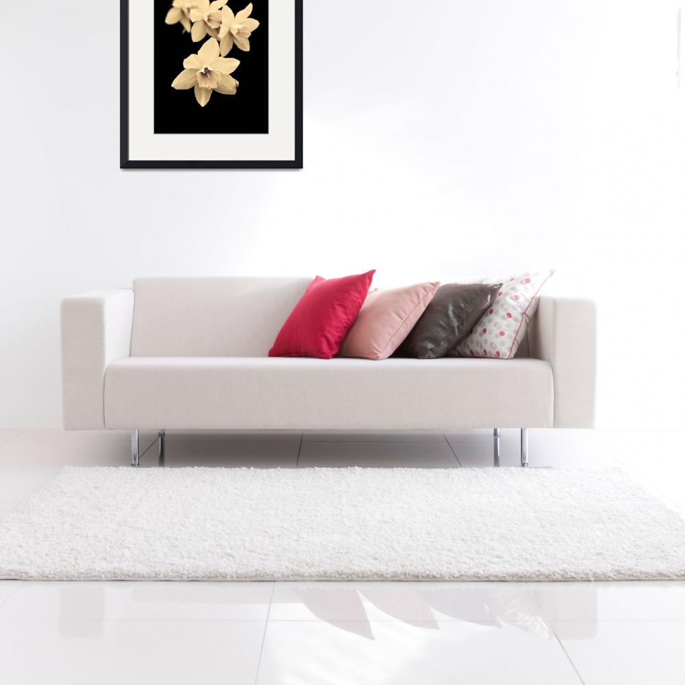 """""""Sepia daffodils&quot  (2011) by Kybdica"""