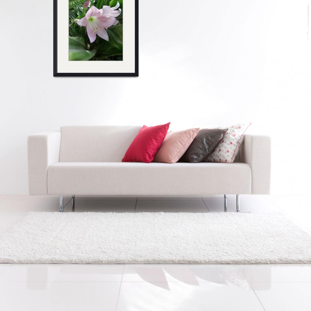 """""""Pale Pink Amaryllis 2&quot  (2009) by ChristopherInMexico"""