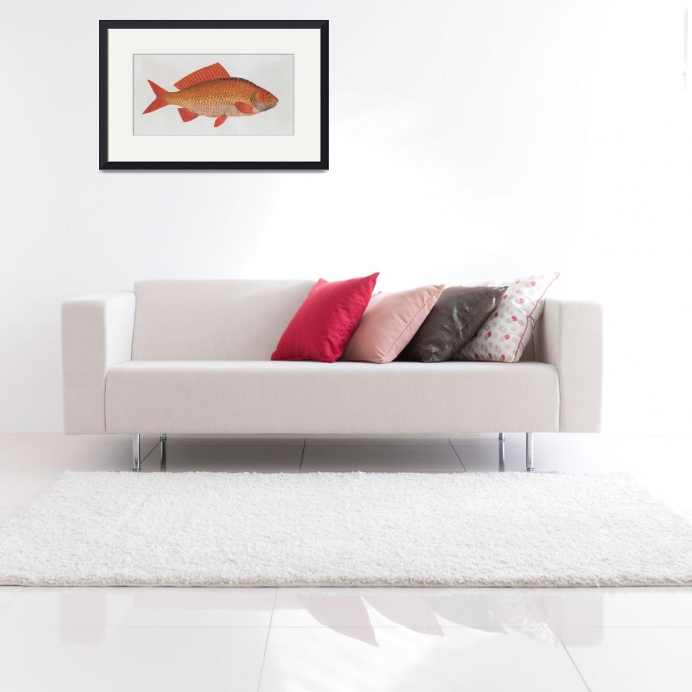 """Vintage Illustration of a Goldfish (1785)&quot  by Alleycatshirts"