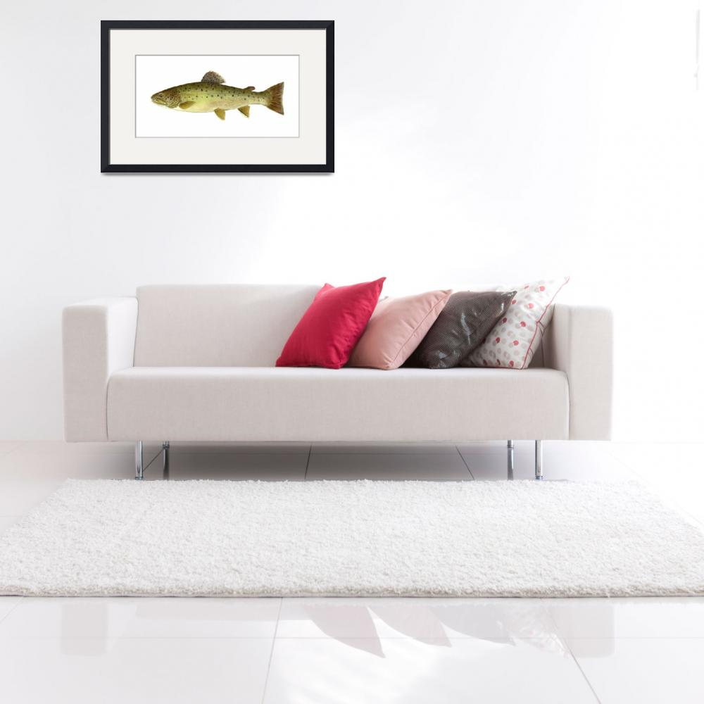 """Illustration of a bull trout&quot  by stocktrekimages"