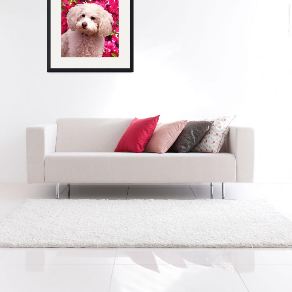 """""""Poodle on Backgroud of Bougainvillea&quot  (2009) by AmyVangsgard"""