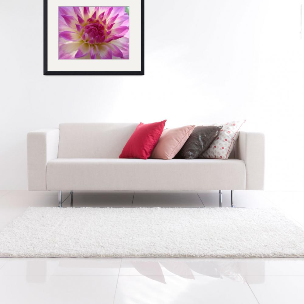 """""""HOLIDAY GIFTS Pink Purple Dahlia FLOWERS Art""""  (2009) by BasleeTroutman"""