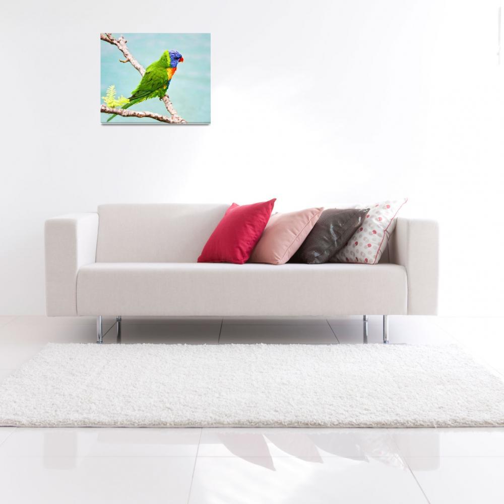 """Green, Blue Lorikeet Bird -Whitsunday, Australia""  (2008) by mjphoto-graphics"