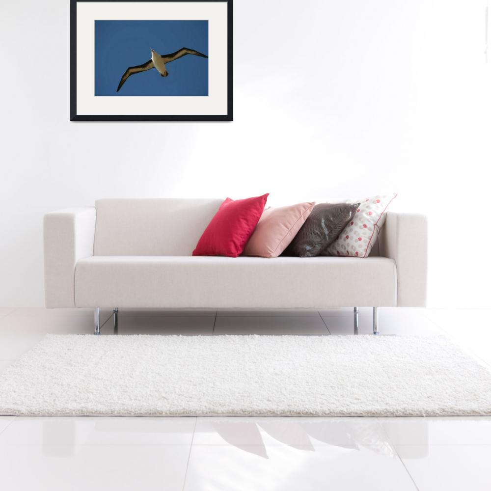 """Black Browed Albatross Soaring, Seen From Almost D&quot  by MarilynsArt"