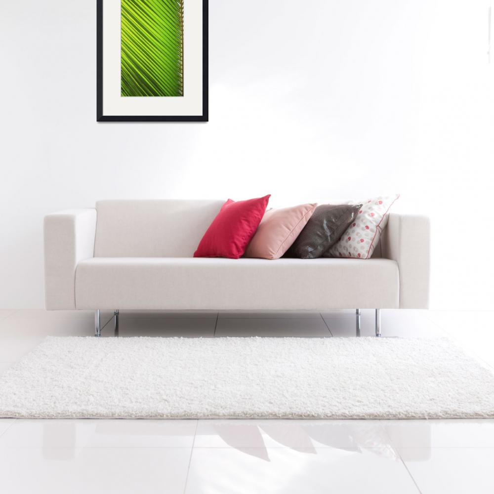 """Graphic Detail Of Coconut Palm Leaf&quot  by DesignPics"