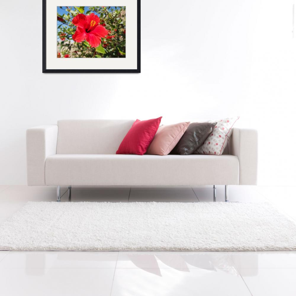"""Kolossi Castle Flower, Cyprus""  by Artsart"