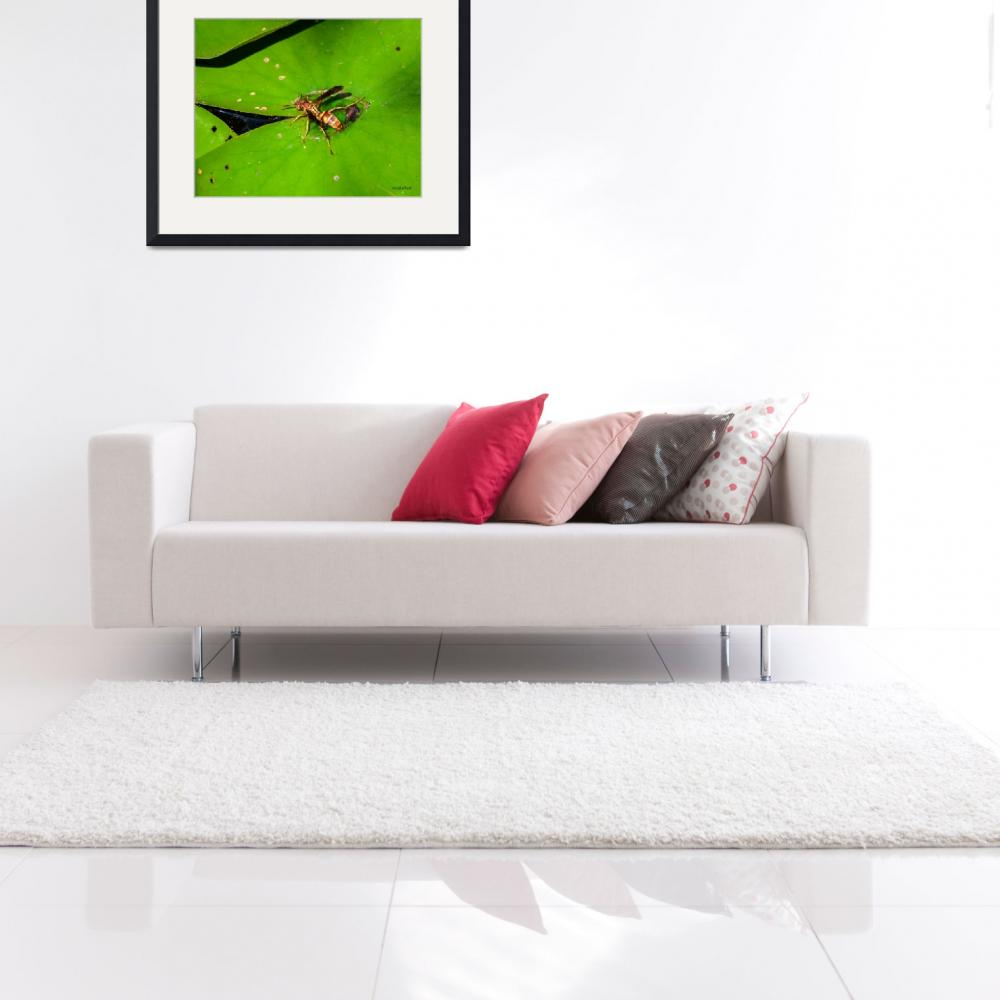 """""""Bee on Lily Pad&quot  (2013) by awsheffield"""