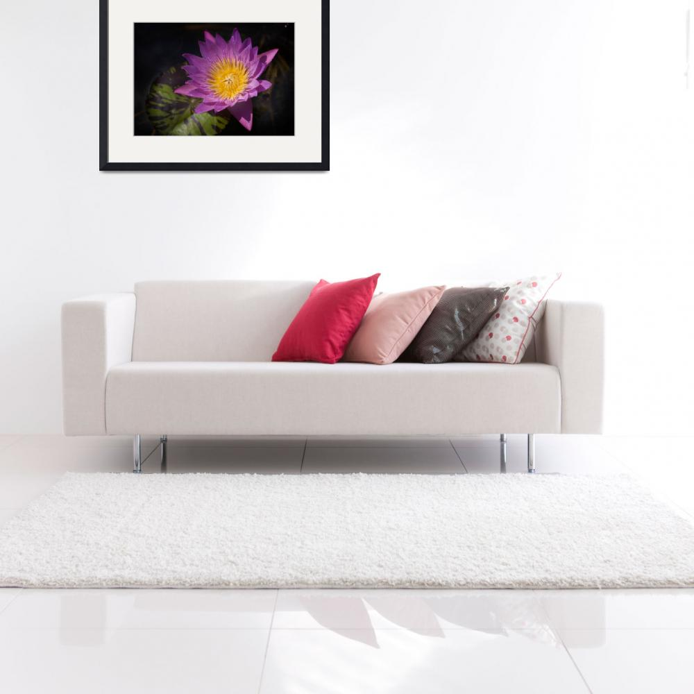 """""""Pink Water Lily&quot  (2013) by JohnnyStevens"""