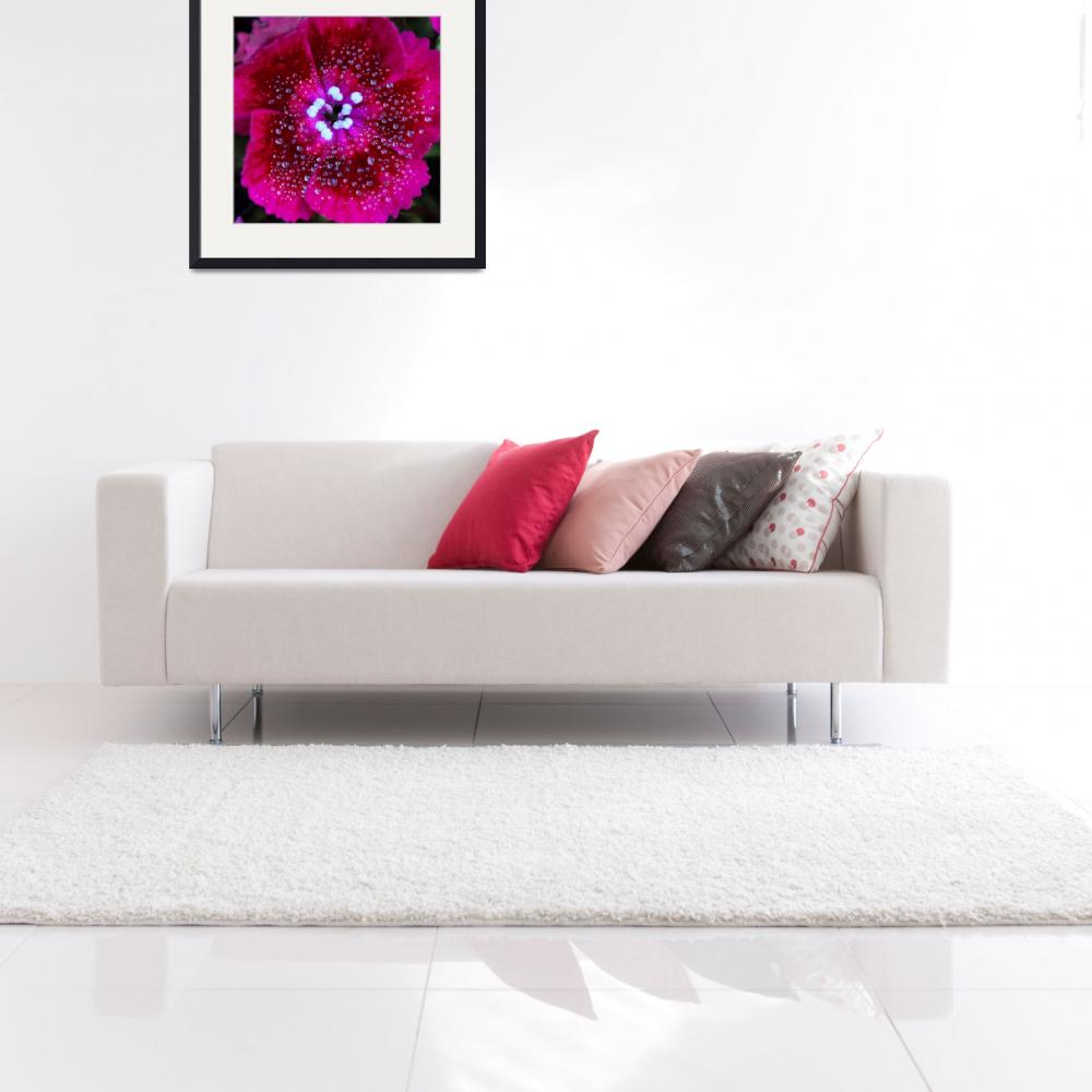 """""""Ruby Red Sweet William Square&quot  (2016) by KsWorldArt"""