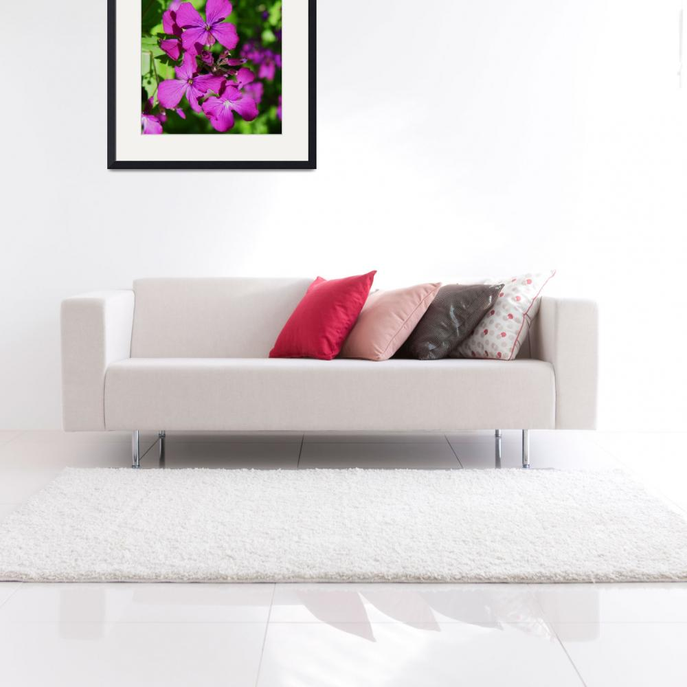 """""""Botanical - Honesty Lunaria - Outdoors Floral&quot  by artsandi"""