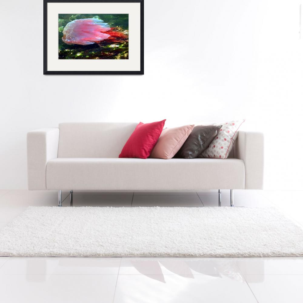 """""""Pink Proud Jelly Fish&quot  (2008) by shutterjunkie"""