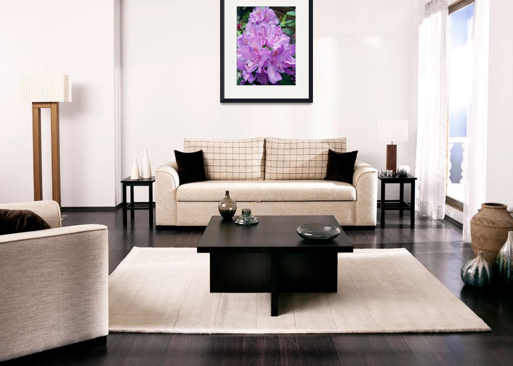 """Mauve Rhododendron""  (2011) by rewards4life"