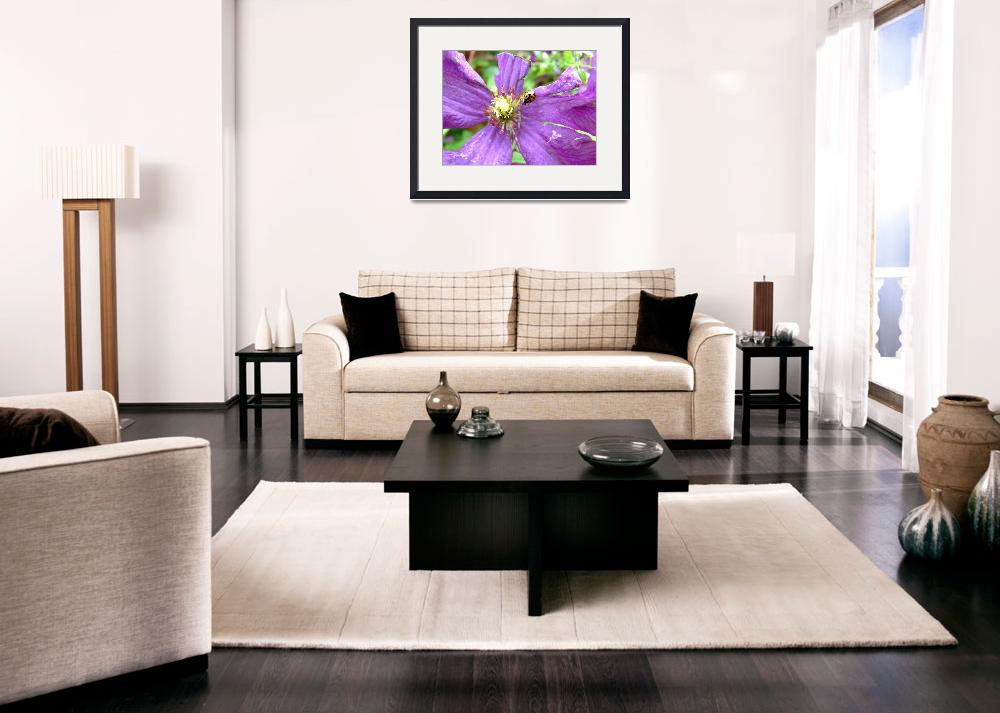 """Clematis with Ladybird&quot  (2007) by JamesSmart"