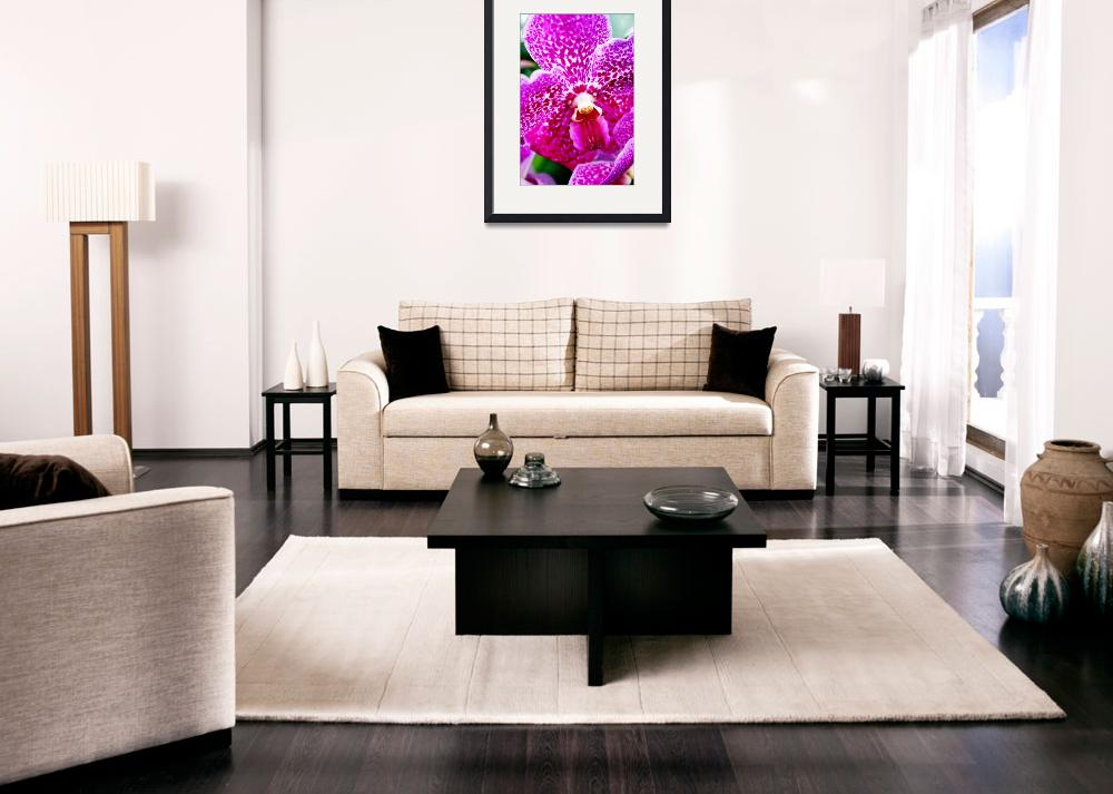 """""""Pink Orchid""""  by lauraward"""