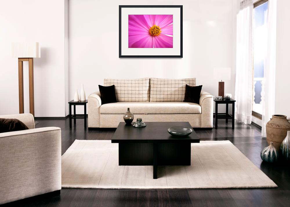 """""""Pink Cosmo""""  (2008) by BuyArt"""