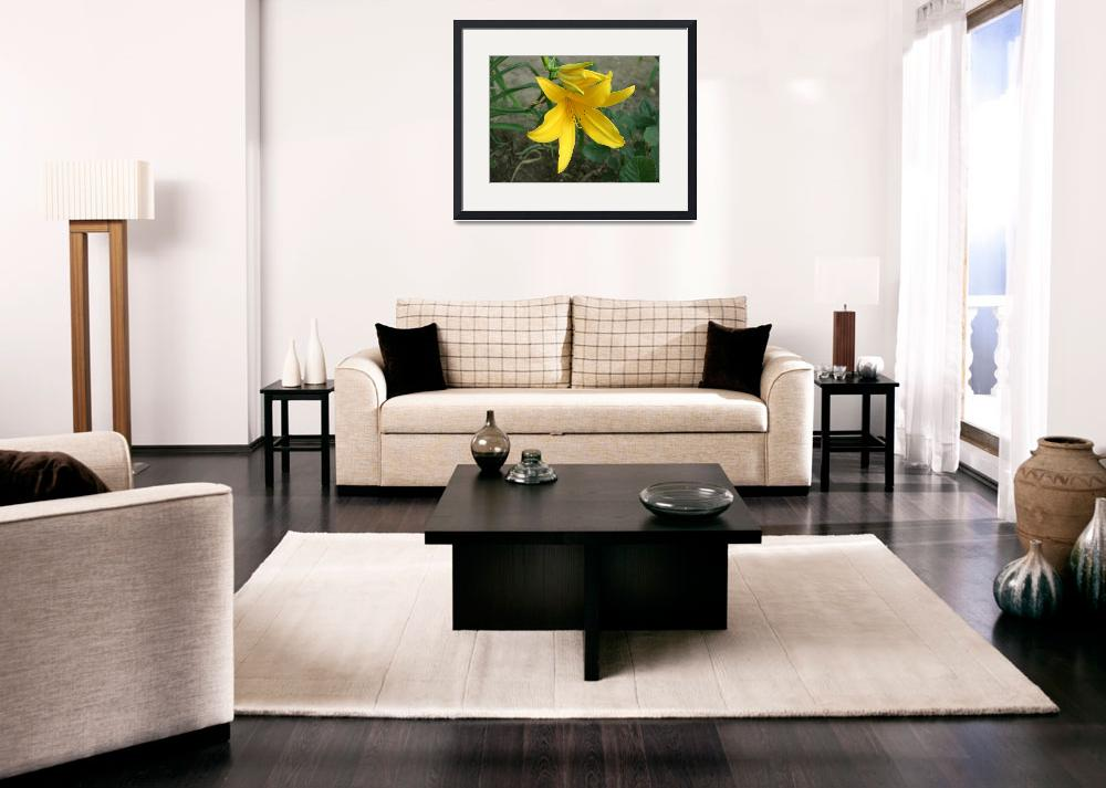 """Yellow Daylily 2""  (2009) by ChristopherInMexico"