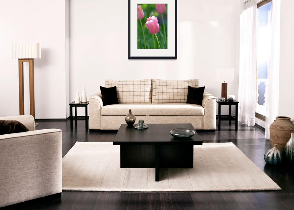 """Pink Tulips""  by BlackwaterDesignNC"