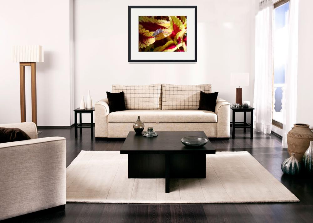 """Even Stink Bugs are Beautiful&quot  (2009) by smayer"