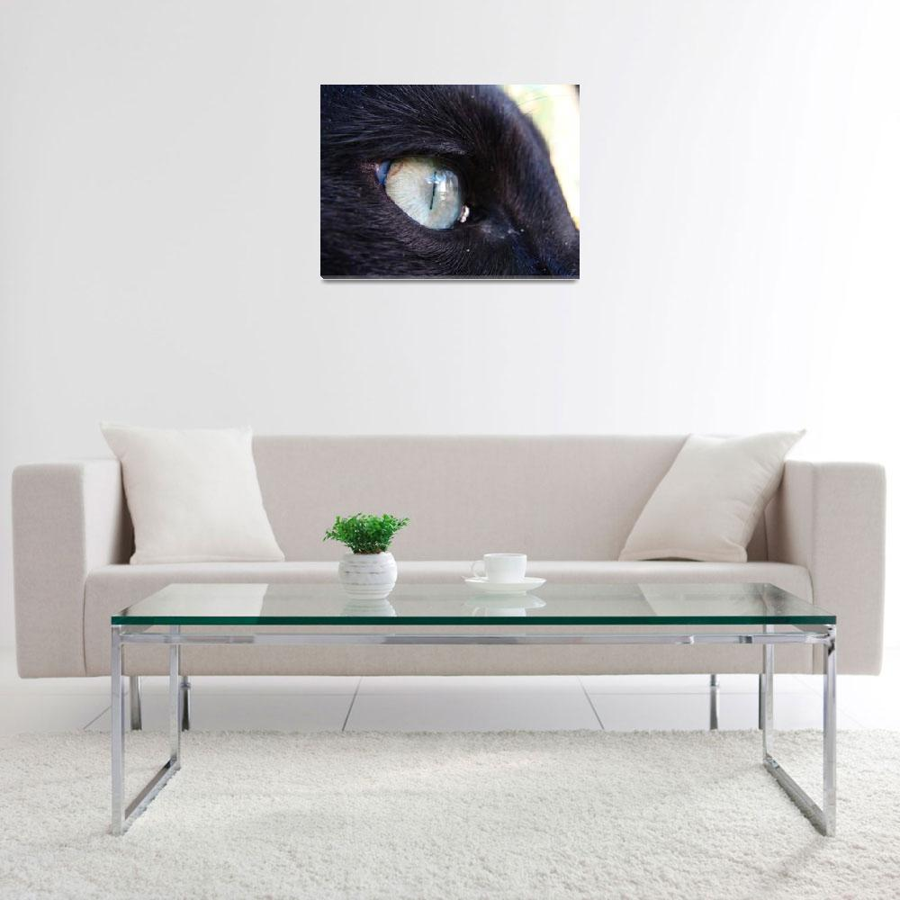 """""""Eye see you""""  (2009) by shanblan"""