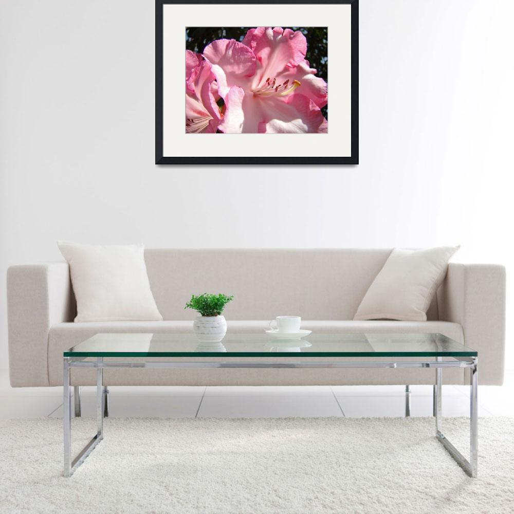 """Rhododendron Flower Beautiful Big Pink Rhodie&quot  (2010) by BasleeTroutman"