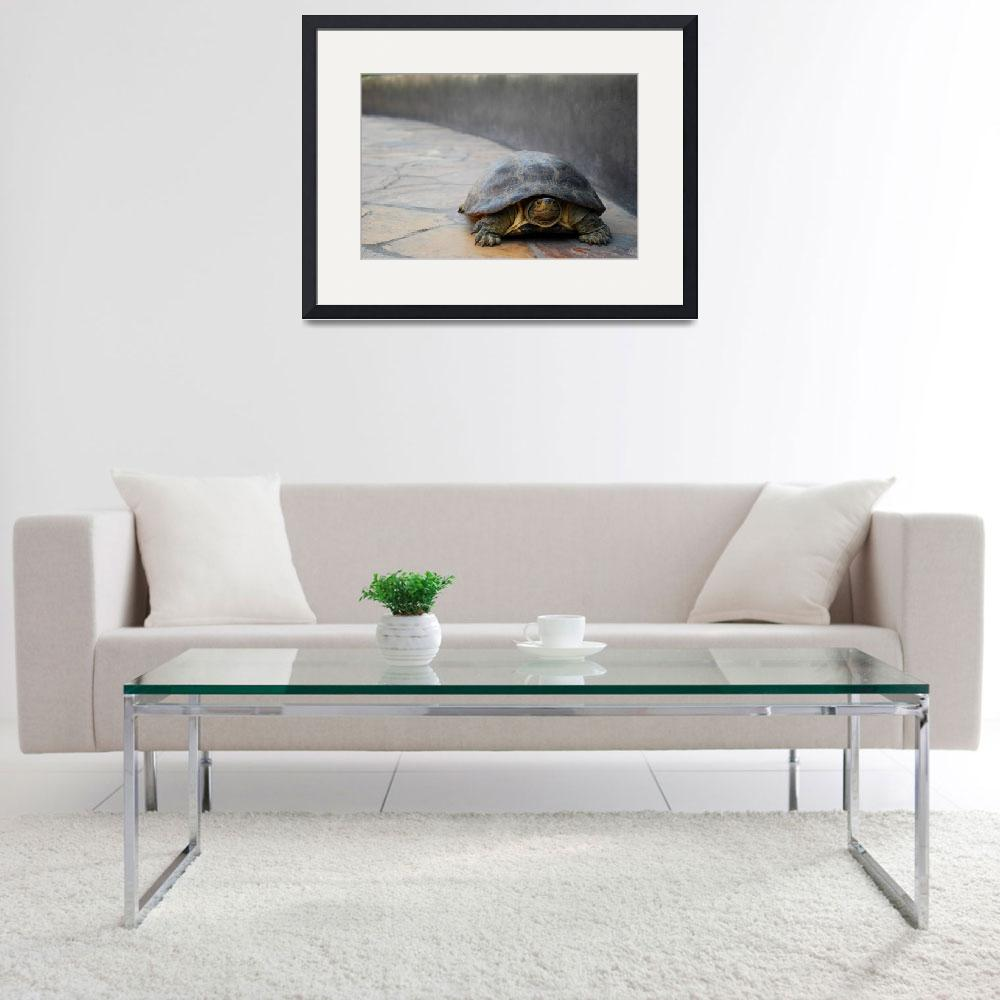 """""""Turtle""""  (2008) by KNKphotos"""