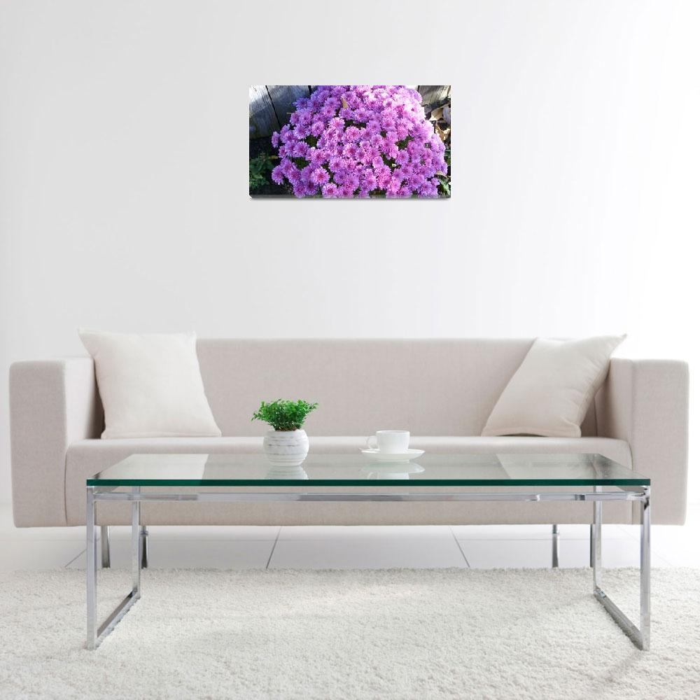"""""""Purple Daisies""""  (2012) by lizmix"""